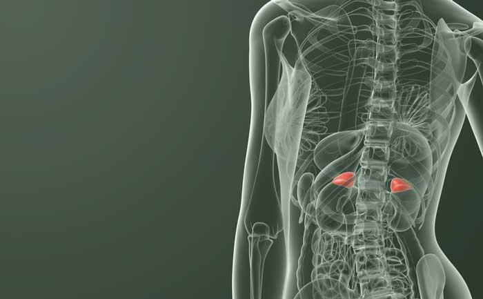 glandes surrenales