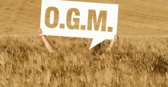Qu'est-ce qu'un OGM?