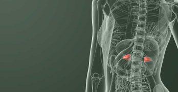 La fonction des glandes surrénales